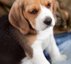 Ohio Dog Boarding Laws