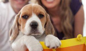 The Six Types of Dog Boutique Shoppers
