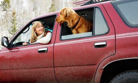 Auto Safety: Safe Restraints for Dogs Riding in Cars