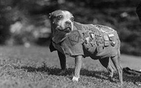 Sgt. Stubby, the Heroic War Dog