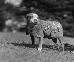 Sgt. Stubby, the Heroic War Dog