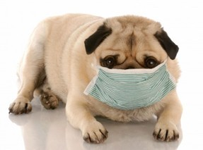 Homeopathic Remedies For Kennel Cough