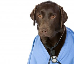 Would Your Dog Make a Good Therapy Dog?