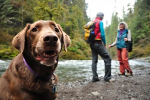 Bring Your Dog on an Outdoor Adventure!