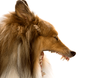 Yawns are Contagious to Dogs, Too