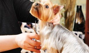 What to Look for in a Dog Groomer