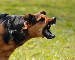 Tips on Dog Aggression