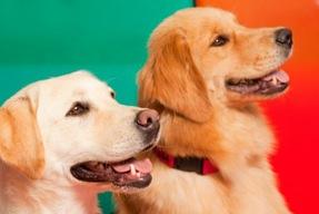 Dog Tutors Help Children in Reading