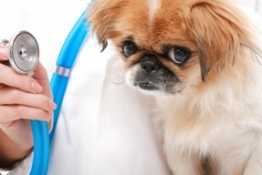 Easy Tapeworm Medication for Dogs