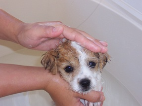 Guide to Dog Bathing