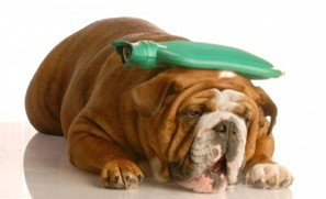 Canine Distemper Alert in Arizona