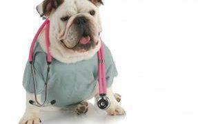 Choosing the best veterinarian clinic