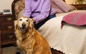 Seizure Dog Heroes
