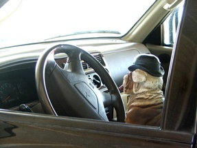 Keep Fido Safe in Vehicles