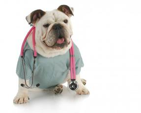 How to diagnose dog deafness or blindness