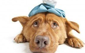 Foods that can poison your dog
