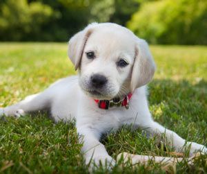 top girl dog names Archives - The Dogington Post