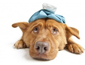 How to Detect UTI's in Dogs
