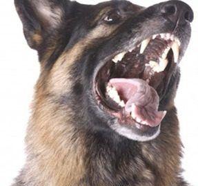 Tips to Cure Dog Dominance Behavior