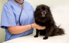 Seizure Disorder in Dogs