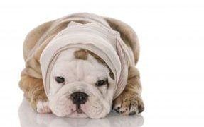 How to Bandage Your Dog