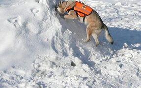 Basic Tips For Dog Training