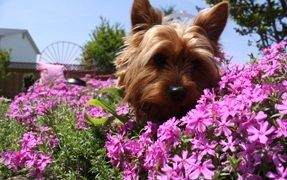 Plants That Are Hazardous to Your Dog