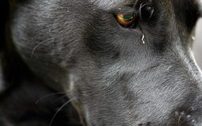 Should You Treat Your Dog's Pink Eye?