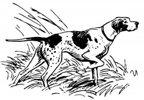 Ideal hunting dog breeds
