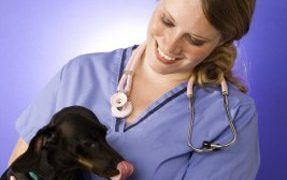 Beginner's Guide to Vaccinating Puppies