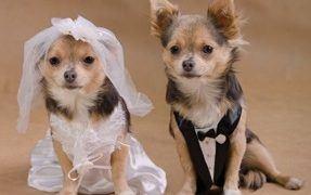 Dog Gone Good Time Wedding