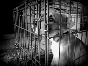 Tips For Handling Previously Abused Dogs