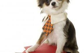 Learn to speak dog language