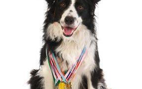 Get Your Dog A Good Citizen Certification