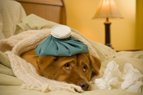 How To Know Your Dog Is Sick