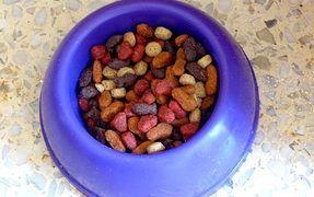Dry vs Wet vs Natural Dog Food