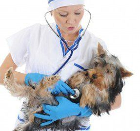 Low Blood Pressure in Dogs