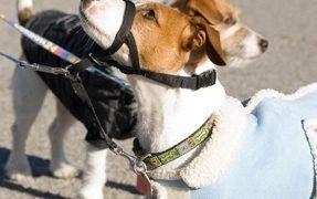 canine socialization training