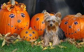 Halloween dangers for your dog