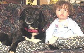 Training Your Dog to Behave Around Children