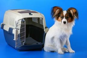 Small dog travel tips