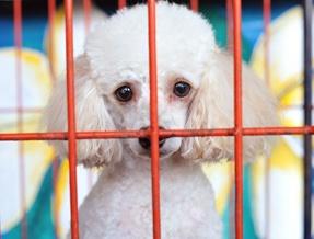 Consider a rescue dog