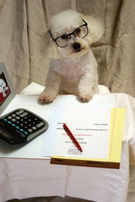 accountingdog