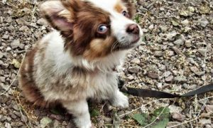 Why is My Dog Eating Rocks? - The Dogington Post