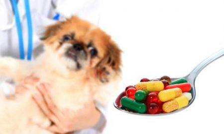 benadryl dosage for dogs Archives - The Dogington Post
