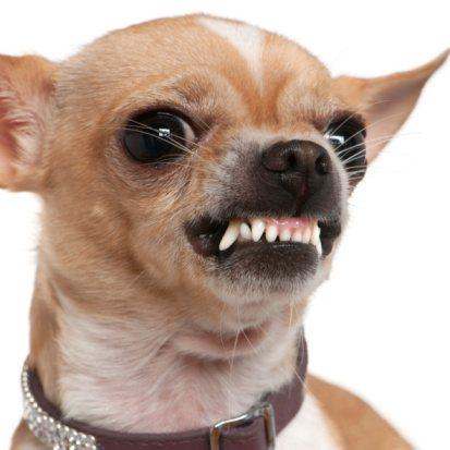 Pets Corner And Dog Grooming