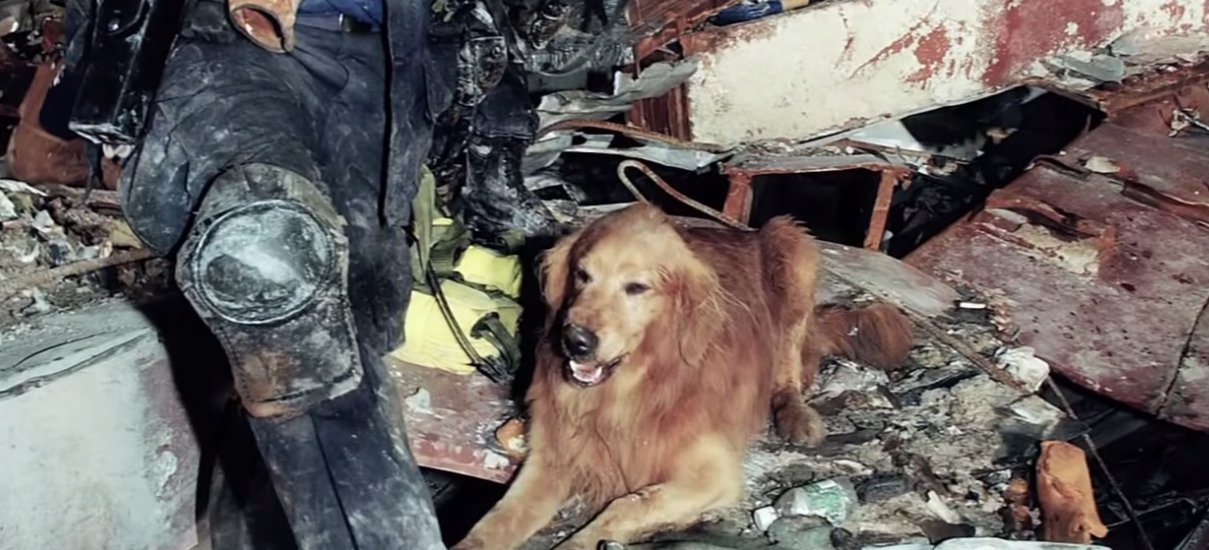 Remember the Hero Dogs of 9/11 - The Dogington Post