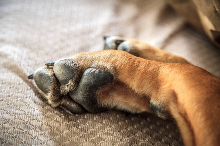 dogs feet smell like corn chips