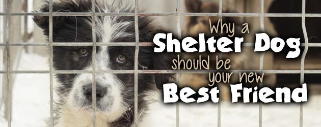 shelterdog_spin
