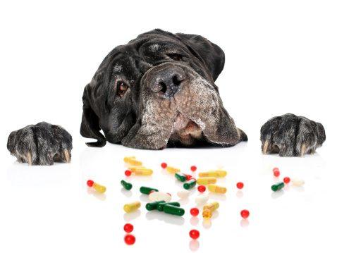 dogpills